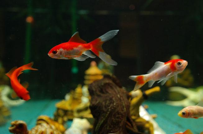 pływające rybki