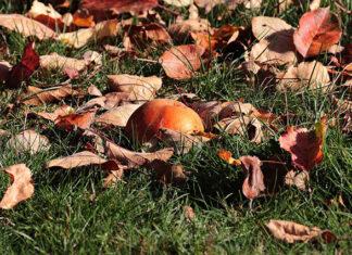 Listopad w ogrodzie i na działce - jakie prace trzeba wykonać