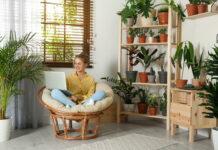 rośliny domowe - rodzaje