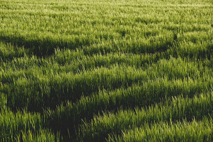 podłoże pod trawnik