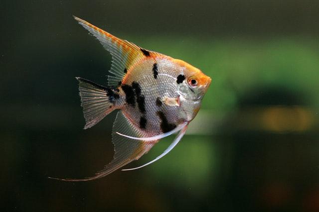 Różne rodzaje pokarmu dla rybek.